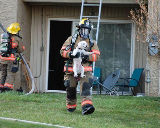 πυροσβέστες κουτάβι διάσωση