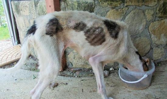 σκυλίτσα κακοποίηση ζώων