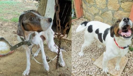 Λίγο πριν από το θάνατο έσωσαν τη σκυλίτσα που μαρτύρησε στα χέρια του ανεύθυνου ιερέα «ιδιοκτήτη» της