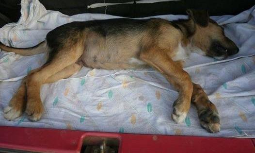 Αδιαφόρησαν για το κουτάβι που ψυχορραγούσε στην είσοδο του Γενικού Παναρκαδικού Νοσοκομείου Τρίπολης