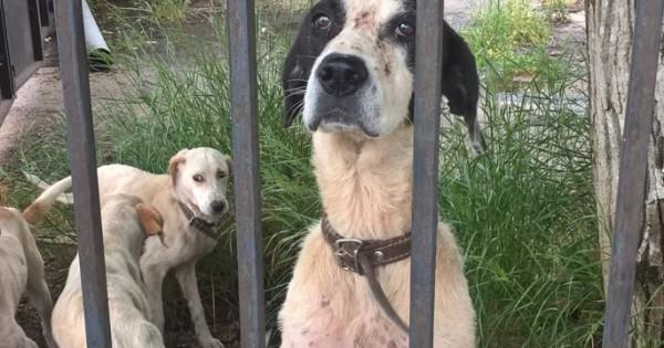 Συνέλαβαν τον ιδιοκτήτη των άρρωστων και σκελετωμένων σκύλων που έτρωγαν ακόμα και τα φύλλα των δέντρων