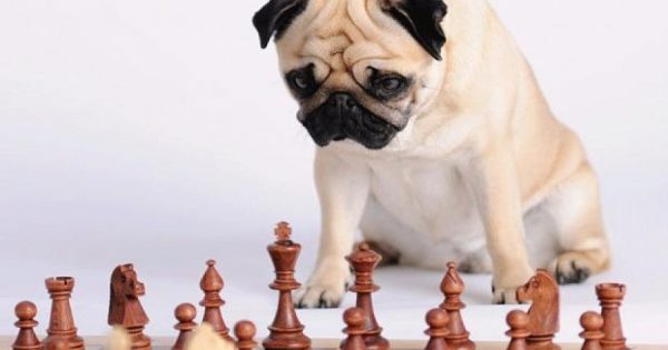 Κουίζ: Πόσο έξυπνος είναι ο σκύλος σας