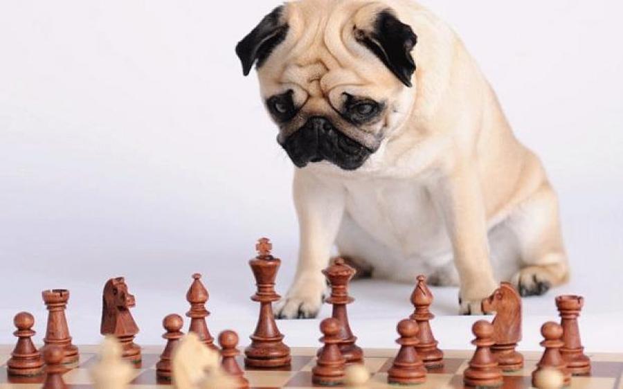 Σκύλος πόσο έξυπνος είναι ο σκύλος μου κουίζ