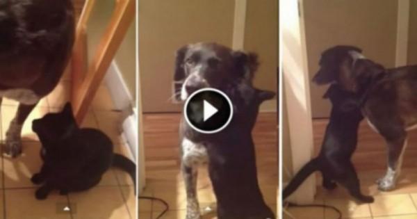 Ο σκύλος έλειπε από το σπίτι για 10 μέρες – Όταν η γάτα τον ξαναείδε συνέβη το απίστευτο!