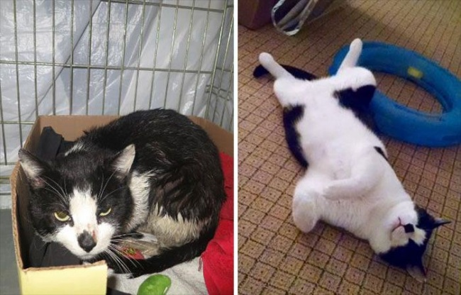 υιοθεσία αδέσποτων ιυοθεσία γάτες