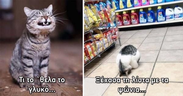 15 θέοτραλες γάτες που κάνουν τα δικά τους και γι' αυτό τις αγαπάμε!