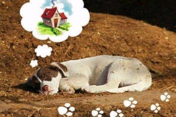 Μια διδακτική ιστορία για όσους εγκαταλείπουν τα ζώα τους καταδικάζοντάς τα σε θάνατο