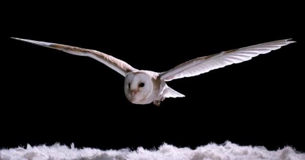 Η κουκουβάγια πετά πάνω από ένα κρεβάτι με φτερά και αποκαλύπτει ένα εκπληκτικό μυστικό