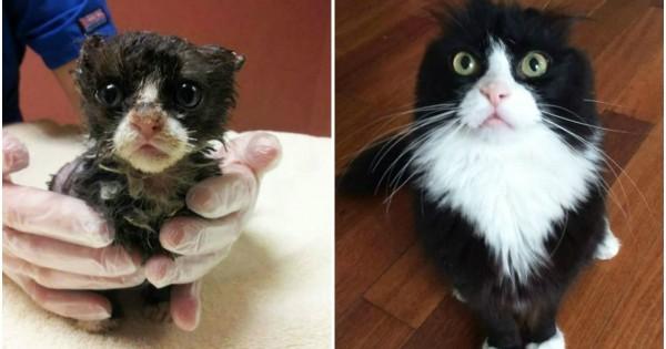 Απλά δείτε: 14 γάτες πριν και μετά την υιοθεσία