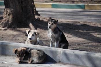 Έξι λόγοι που κάνουν έναν ημίαιμο σκύλο πιο ενδιαφέρον!