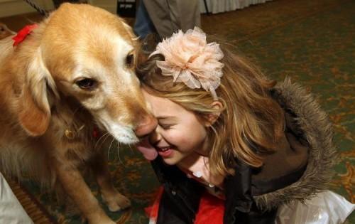 Γιατί τα σκυλιά πρέπει να είναι κοινωνικοποιημένα