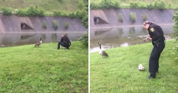 Μια μητέρα χήνα «καλεί» έναν αστυνομικό για ένα πολύ επείγον λόγο!
