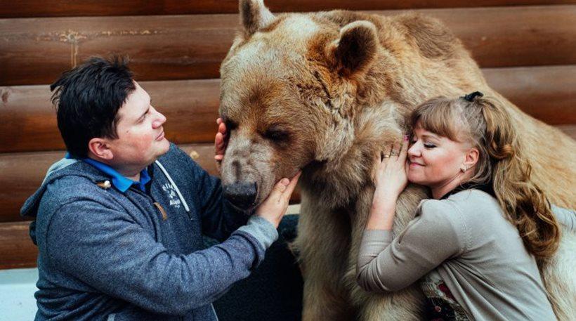 Ρωσία κατοικίδιο