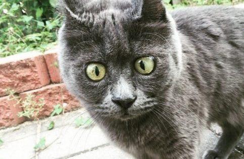 Η γάτα με τη μόνιμη έκπληξη στο πρόσωπό της! Αψήφησε τις προβλέψεις του κτηνίατρου (ΦΩΤΟ)