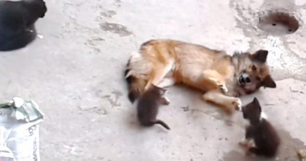 Η μαμά γάτα φέρνει τα μικρά της για να συναντήσει έναν «παλιό» φίλο..