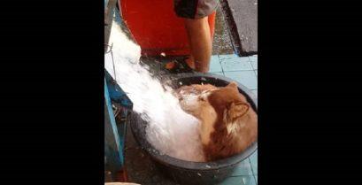 Ένα δροσιστικό μπάνιο για το χάσκι
