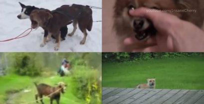"""Βίντεο όλα τα λεφτά: Τα ζώα τραγουδούν το """"We Will Rock You"""""""