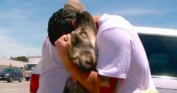 Ένας Αμερικανός στρατιώτης και ένα κουτάβι στο Ιράκ «δέθηκαν» για πάντα – Πολύ συγκινητικό βίντεο