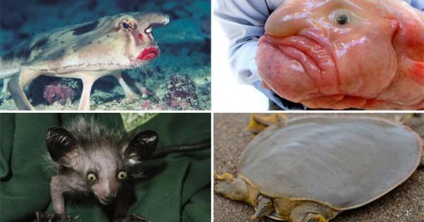 Αυτά είναι τα πιο περίεργα ζώα του πλανήτη! (Εικόνες)
