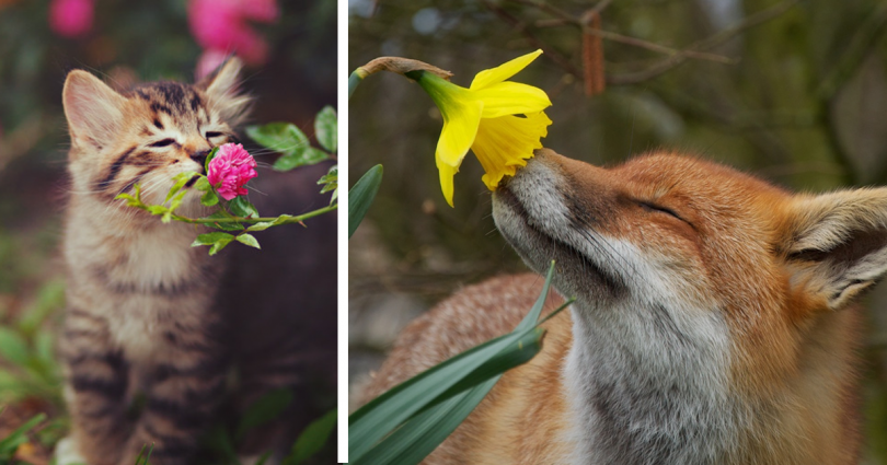animals-smelling-flowers-fb3-810x425
