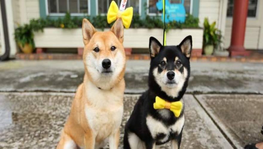 Σκύλος περαστικοί κίτρινη κορδέλα