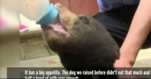 Αγρότης «υιοθέτησε» αδέσποτο «κουτάβι» και ανακάλυψε ότι ήταν… αρκούδα! (βίντεο)