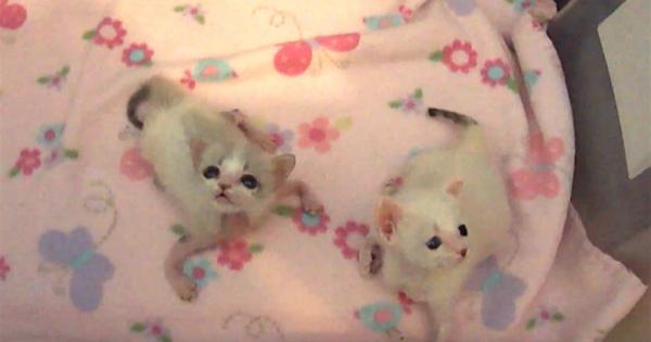 Βρήκαν παρατημένα γατάκια στη Πόρτα τους. Τότε παρατηρούν ότι κάτι δε πάει καλά με το ένα γατάκι…
