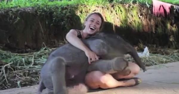 Σκέτη γλύκα: Ελεφαντάκια που κάνουν σαν σκύλοι!