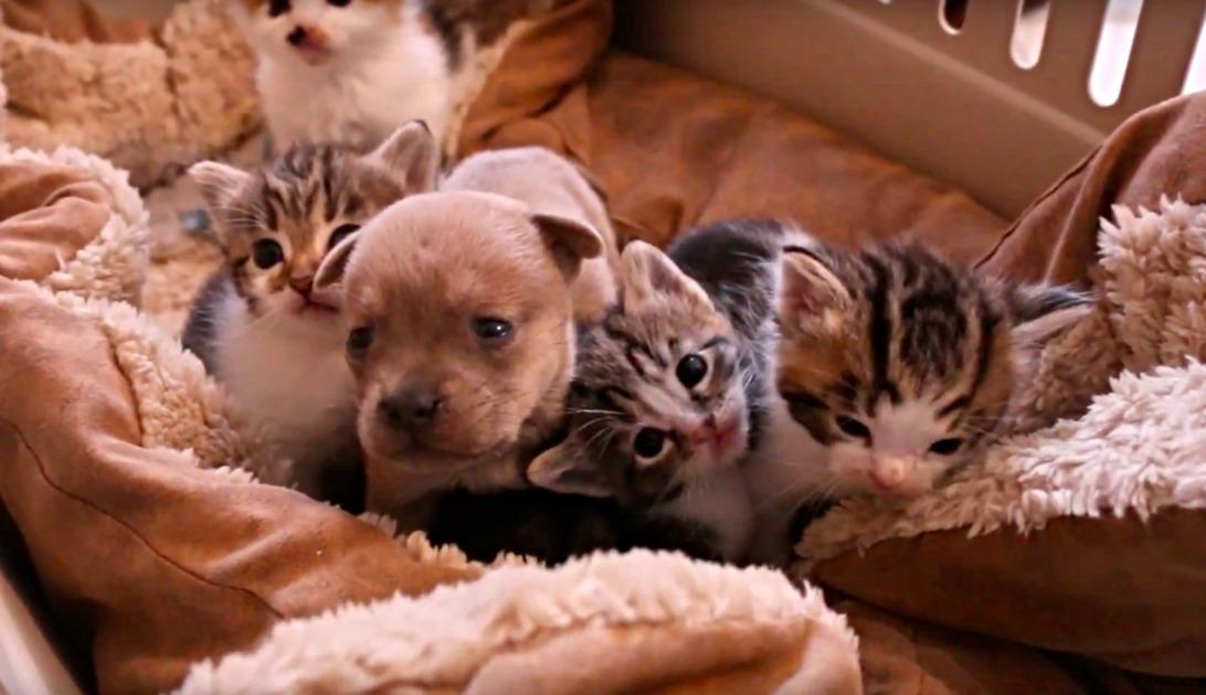 ορφανό κουτάβι γάτες