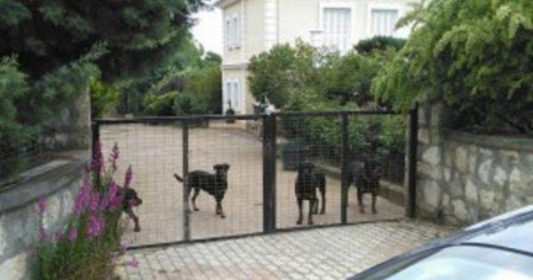 Υπόθεση «Ροτβάιλερ»: Η σύζυγος του 72χρονου ζήτησε την υιοθεσία των σκυλιών