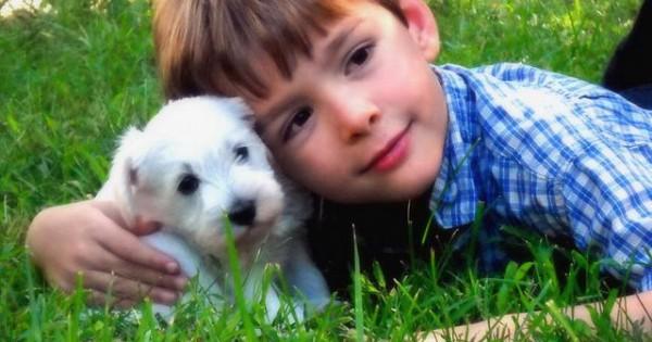 Το ξύλο βγήκε από τον παράδεισο – Ένα άρθρο για τα συναισθήματα των σκύλων που πρέπει να διαβάσετε