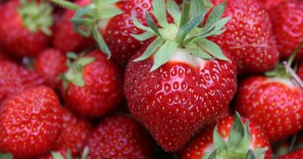 Μπορώ να ταΐσω το σκύλο μου φράουλες;