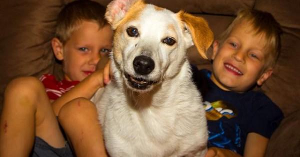 Σκύλος και παιδί: Όταν με αυτοθυσία σώζει ο ένας τη ζωή του άλλου! (βίντεο)
