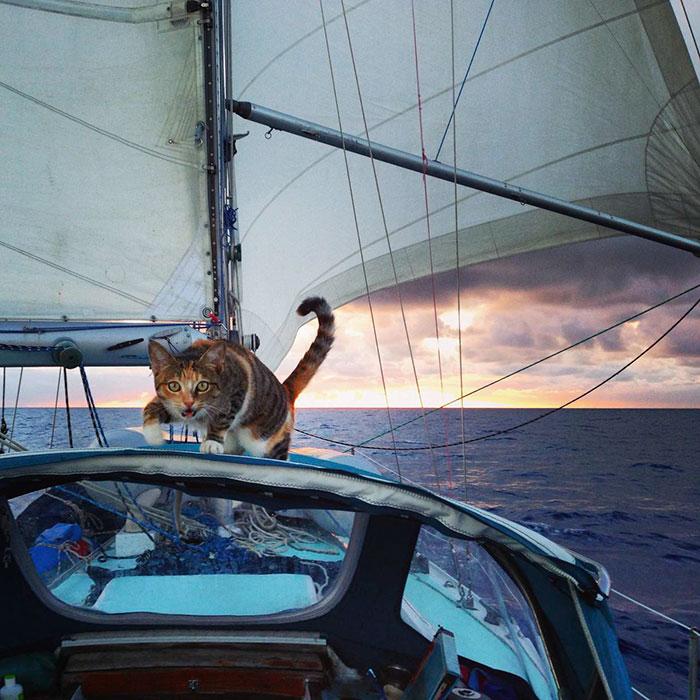 αδέσποτη γάτα