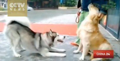 Η διαφορά μεταξύ ενός επαγγελματία και ενός απλού σκύλου