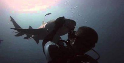 Ένας καρχαρίας που λατρεύει τα χάδια