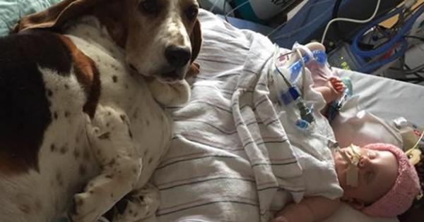 Ο σκύλος που συγκίνησε τους πάντες: Αρνείται να εγκαταλείψει το μόλις 5 μηνών μωράκι που έπαθε εγκεφαλικό