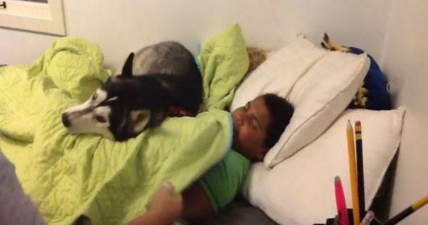 Προσπαθεί να ξυπνήσει το γιο της για να πάει σχολείο – Δείτε όμως τι κάνει ο σκύλος (ΒΙΝΤΕΟ)