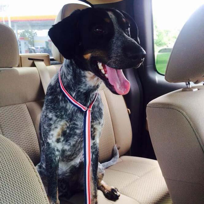 υιοθεσία σκύλων σκύλοι ιυοθεσία