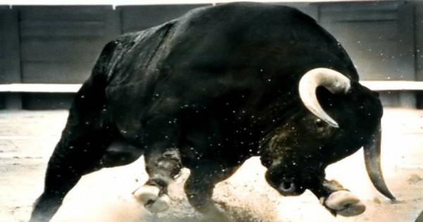 Η μανία με την οποία ένας ταύρος χτυπά έναν άνθρωπο! [βίντεο]