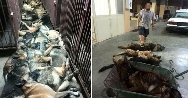 Δεκάδες σκυλιά θανατώθηκαν από εταιρεία ασφαλείας στο Κουβέιτ όταν τελείωσε η σύμβασή της!