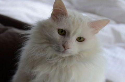 Αυτή η γάτα ήπιε 3 μπουκάλια κρασί… Δείτε τι της συνέβη!