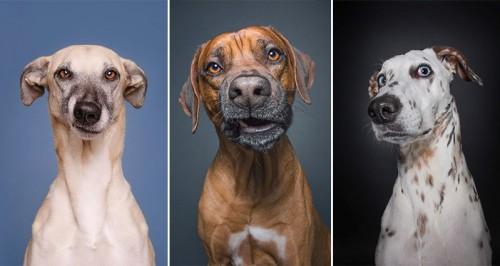 τεστ εξυπνάδας Σκύλος έξυπνος σκύλος