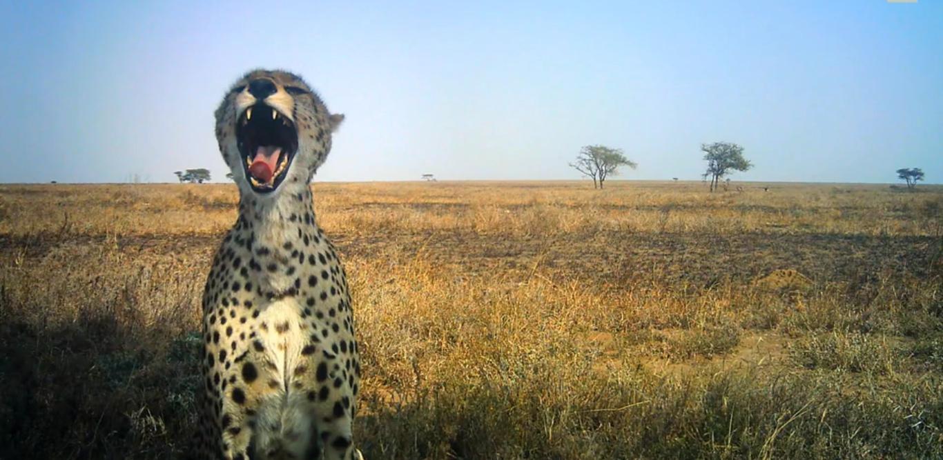 τανζανία άγρια ζώα