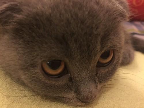χάθηκε γατάκι