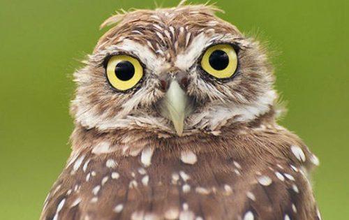 Έρευνα: Τα πουλιά δεν είναι καθόλου χαζά
