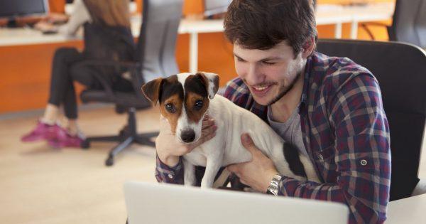 Αυτή είναι η καλύτερη επιχείρηση του κόσμου για να δουλεύεις παίρνοντας μαζί και τον σκύλο σου (ή τη γάτα σου)!
