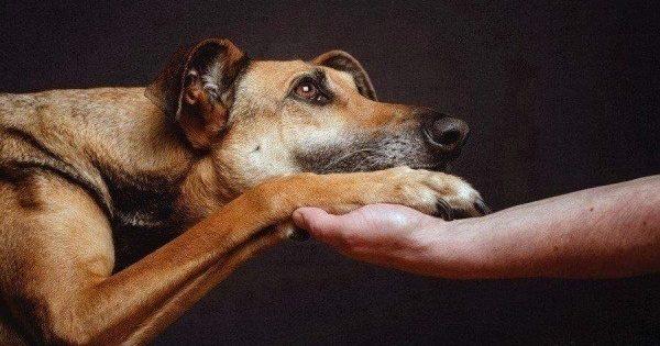 Πώς πρέπει να αντιδράσετε αν γίνετε μάρτυρες δηλητηρίασης ζώου!