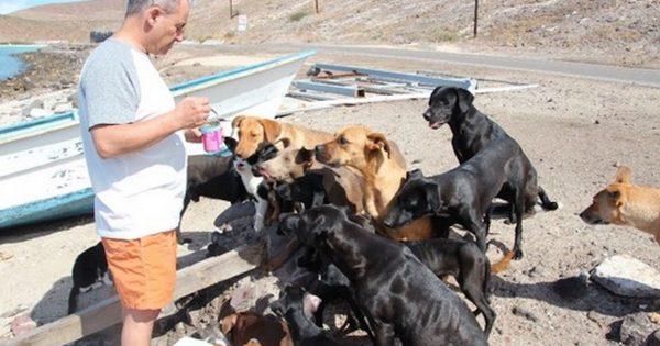 Ζευγάρι έσωσε 34 αδέσποτα σκυλιά και γάτες στη διάρκεια των διακοπών του!