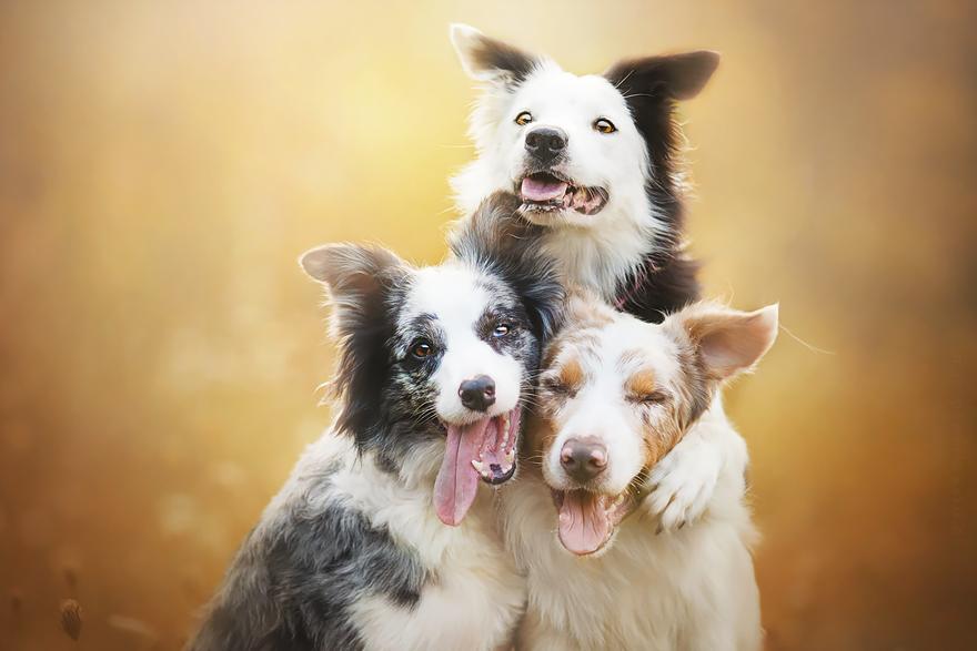 φωτογραφίες σκύλων